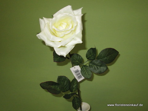 Promotion-Satin-Rose/72cm/creme