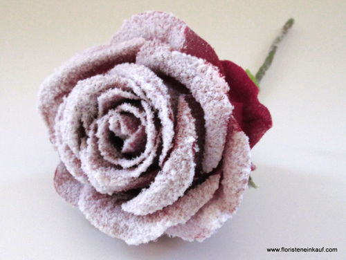 Rose m. Schnee, 26cm, bordeaux